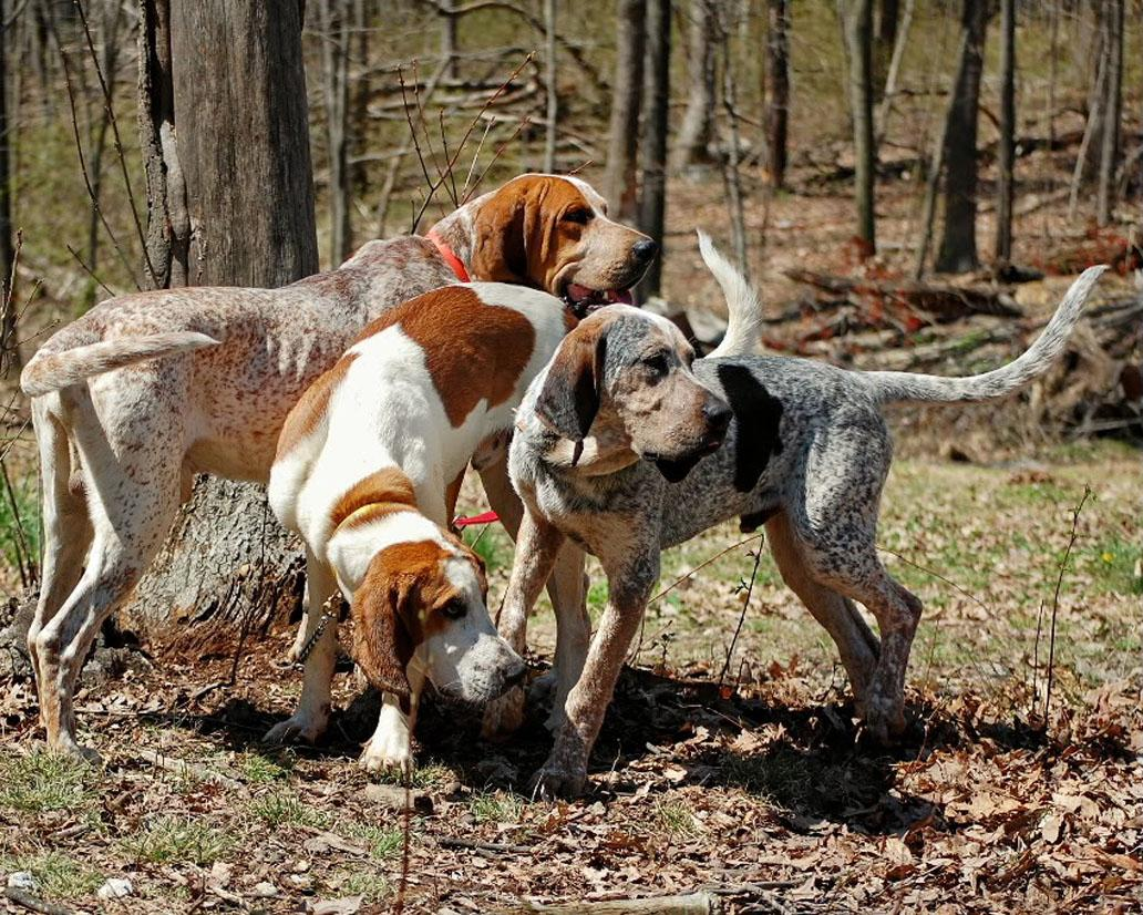 Dog Boarding For Large Breeds Near Me