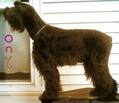 Giant Breed Dog Rescue California