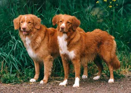 Save A Life Dog Rescue Nova Scotia
