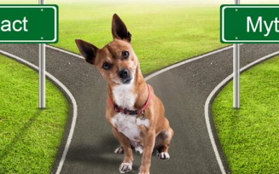 10 Dog Myths