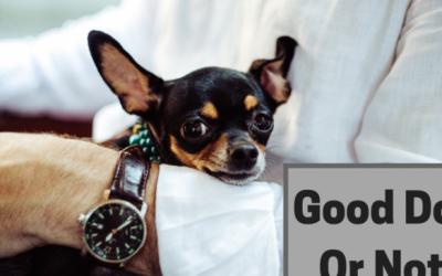 10 Common Dog Behavior Problems & 10 Easy Solutions