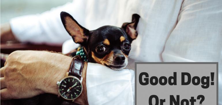 dog with businessman