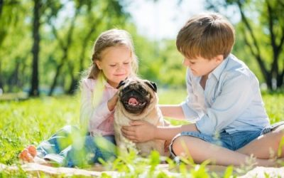 Good with Kids Dog Breeds