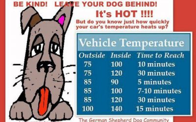 13 Best Hot Weather Tips for Dogs & Cats