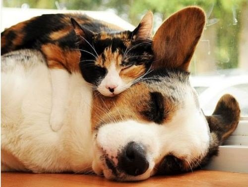 calico dog and cat rescues