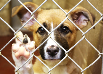 10 Myths About Rescue/Shelter Dogs