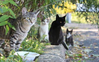 Stray Vs. Feral Cats