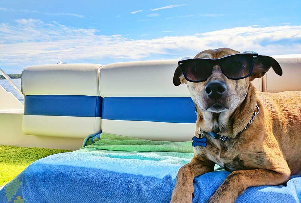 10 Tips for Pets in Summer