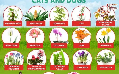 Poisonous Plants & Foods for Dogs & Cats