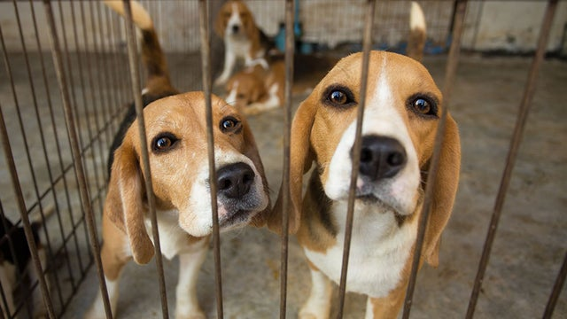 "Some Good News for Lab Animals ~ Many will Now Be ""Adopted"" Instead of Euthanized After Experiments!"