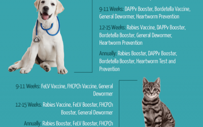 When to Vaccinate Your Dog/Cat