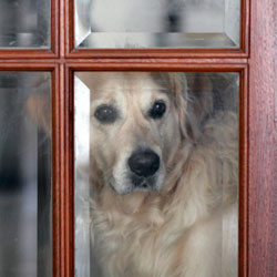 Quarantined Indoors with your Dogs?  Here's Some Fun Mental Stimulus for Both of You!