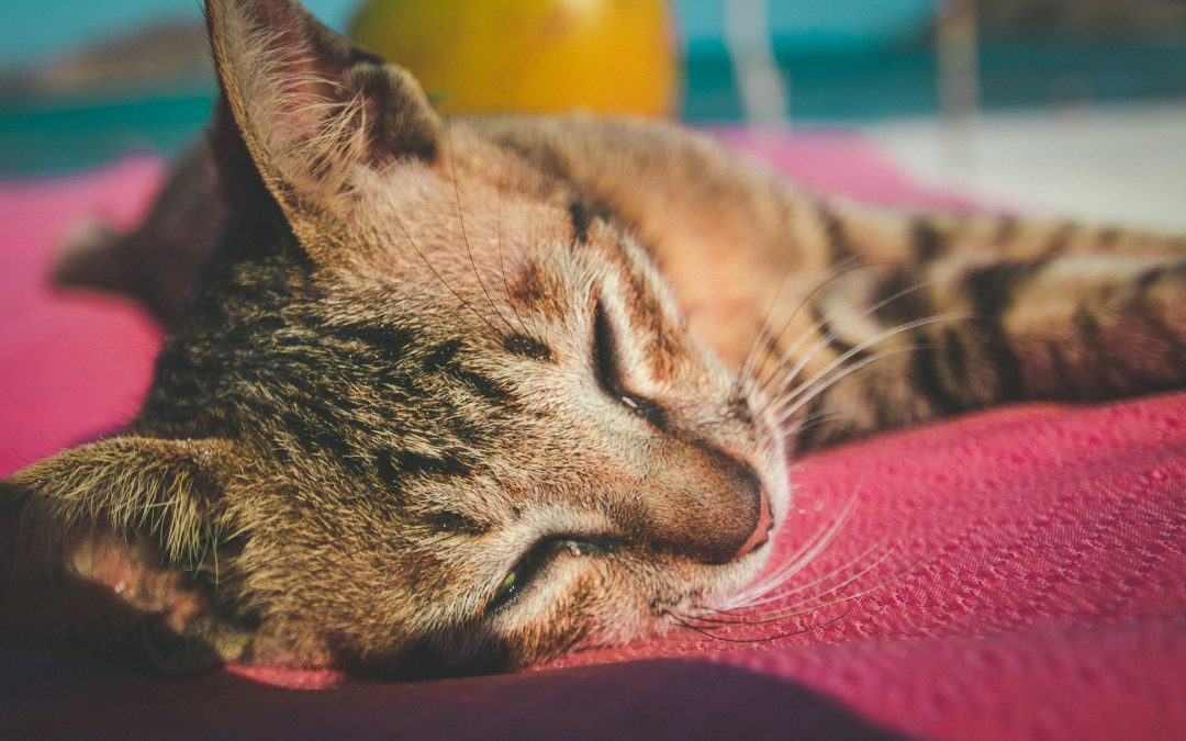 5 Signs to Never Ignore In Our Pets