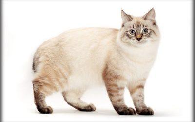 7 Popular Cat Breed Profiles