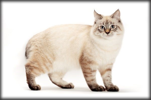 7 Popular Cat Breed Profiles