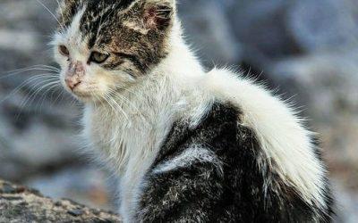 Stray Cats vs. Feral Cats