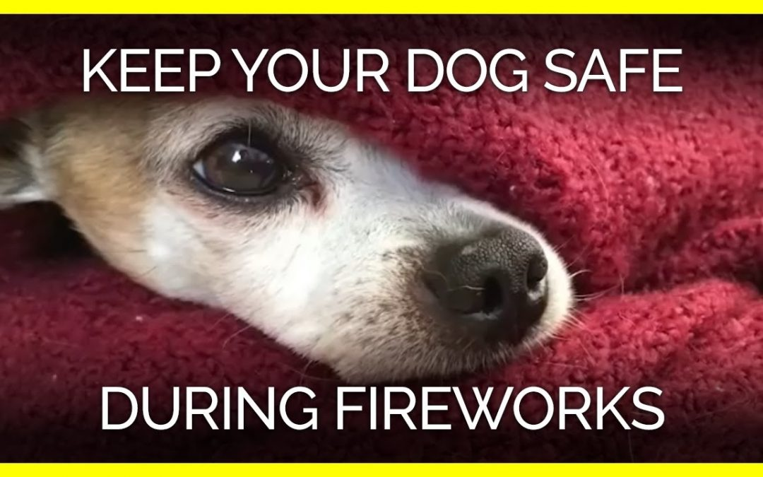 July 4th Fireworks ~ & Your Pets!