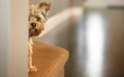 Traumatized, Fearful Dogs or Cats ~ How To Help Them!