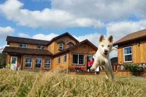 BnB & Vacation Homes