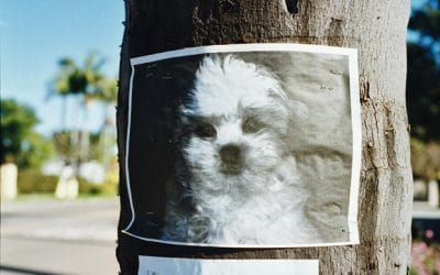 5 Tips To Finding Your Missing/Lost Dog or Cat